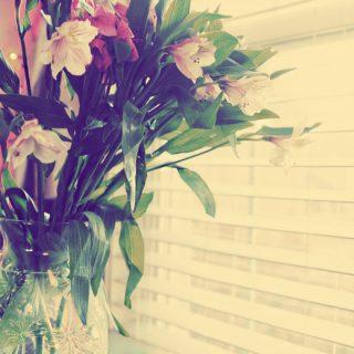 Jan 1 Flowers