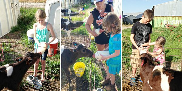 Kids-Feeding-Calves