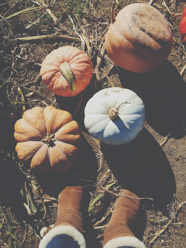 October-23-Pumpkin-Patch