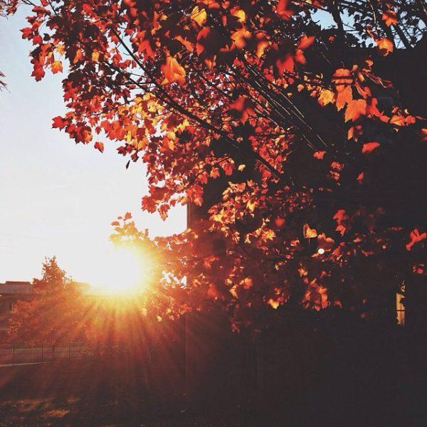 November 12th Sun Tree