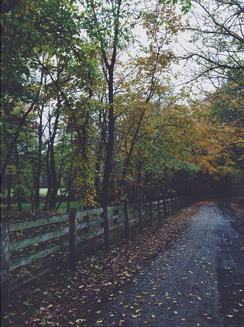 leafy autumn path