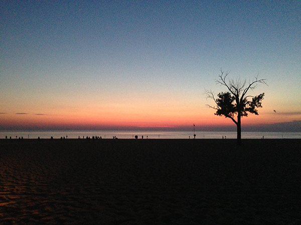 Tree-at-Sunset