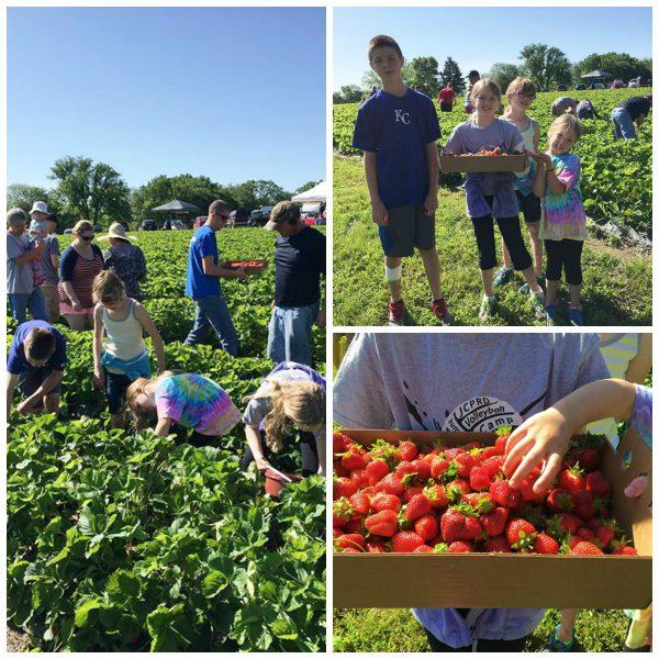 Wohletz Berry Farm
