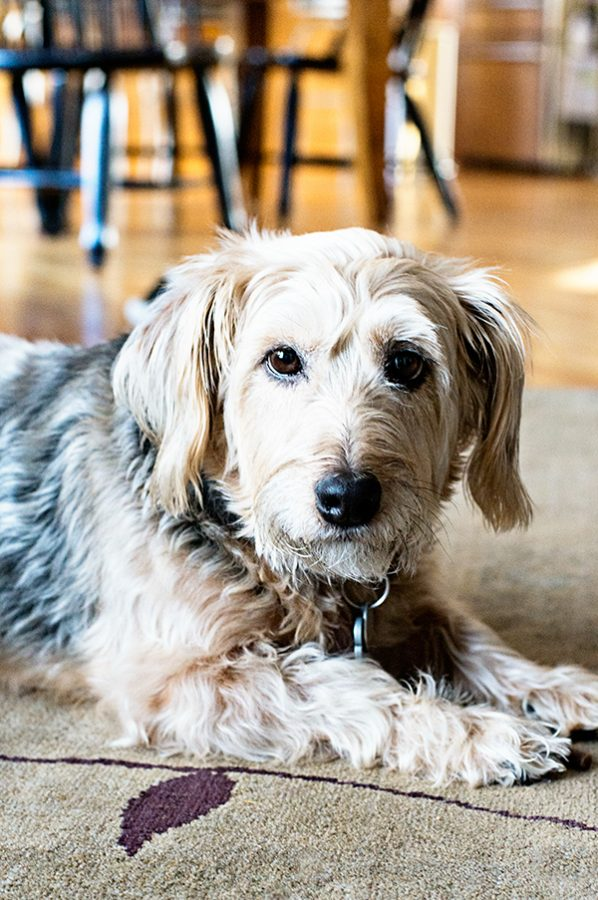 February 2nd Meg our Terrier Mix Dog