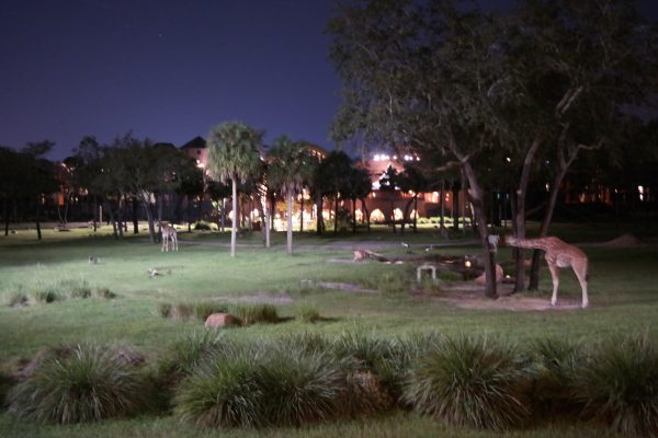 Animal Kingdom Lodge at Night