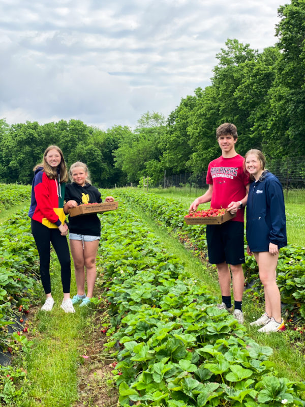 4 kids in a strawberry patch